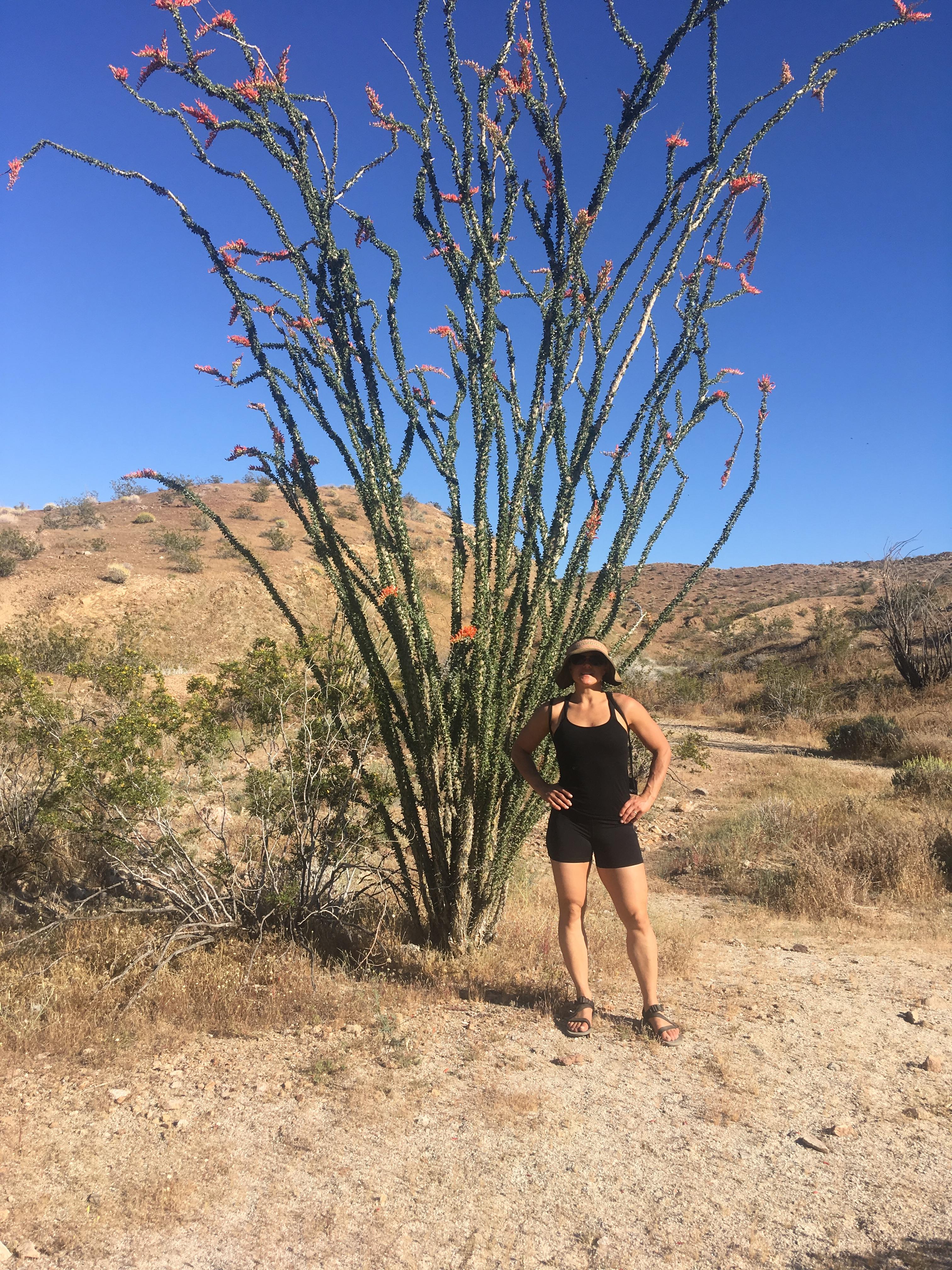 Me in the Anza-Borrego Desert next to an Ocotillo plant